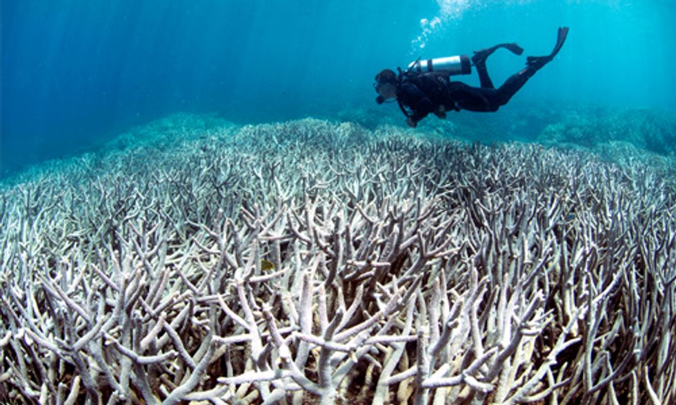 Scientists Confirm: 93% of Great Barrier Reef Now Bleached