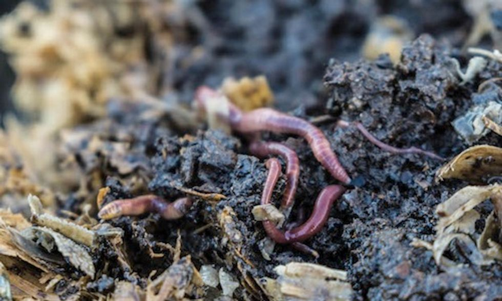 The Role of the Worm in Recycling Wastewater