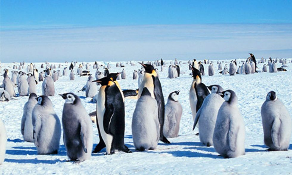 10 Fun Facts About Penguins