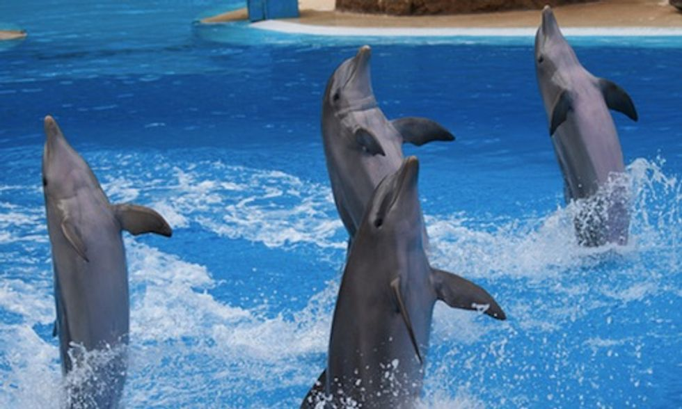 Tens of Thousands of People Demand Arizona's 'Swim With The Dolphins' Park Be Stopped