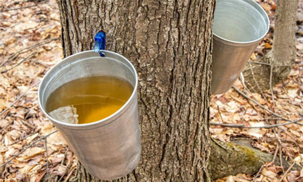 Maple Syrup Farmer Concerned Climate Change Will Prevent His Kids From Continuing Family Business
