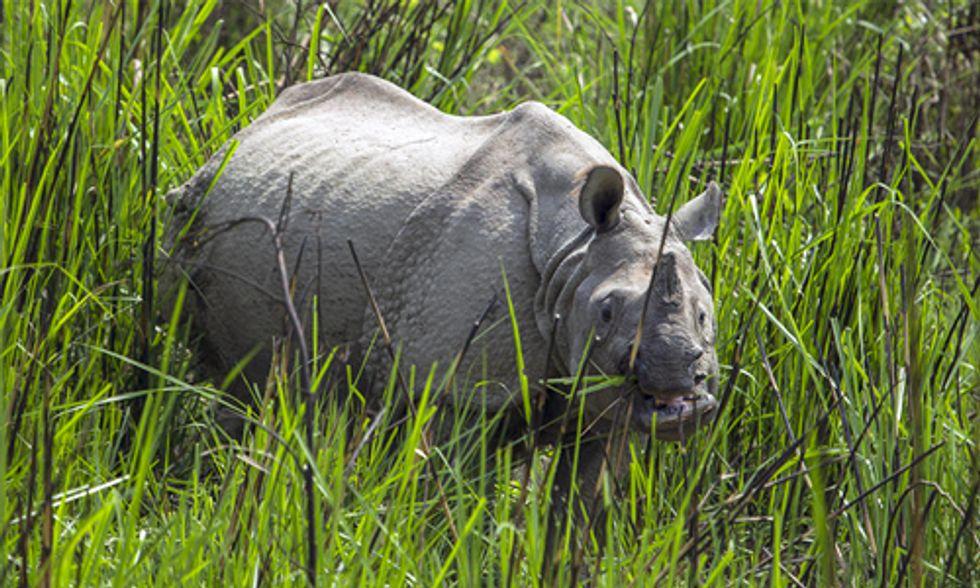 Huge Success: Two Years of Zero Rhino Poaching in Nepal