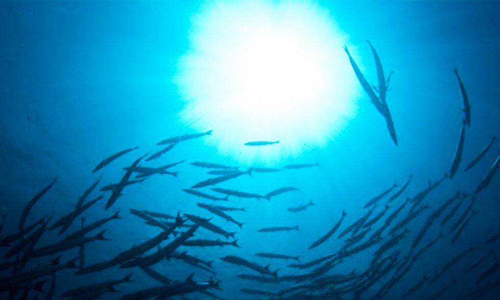 Dead Zones Devour Oceans' Oxygen