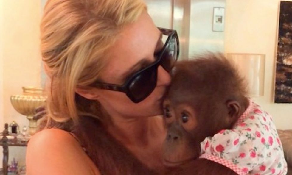 How Paris Hilton's Instagram Post Endangers the Survival of Orangutans and Chimpanzees