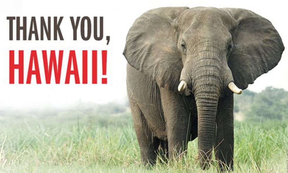 Historic Vote Ends Hawaii's Ivory Trade