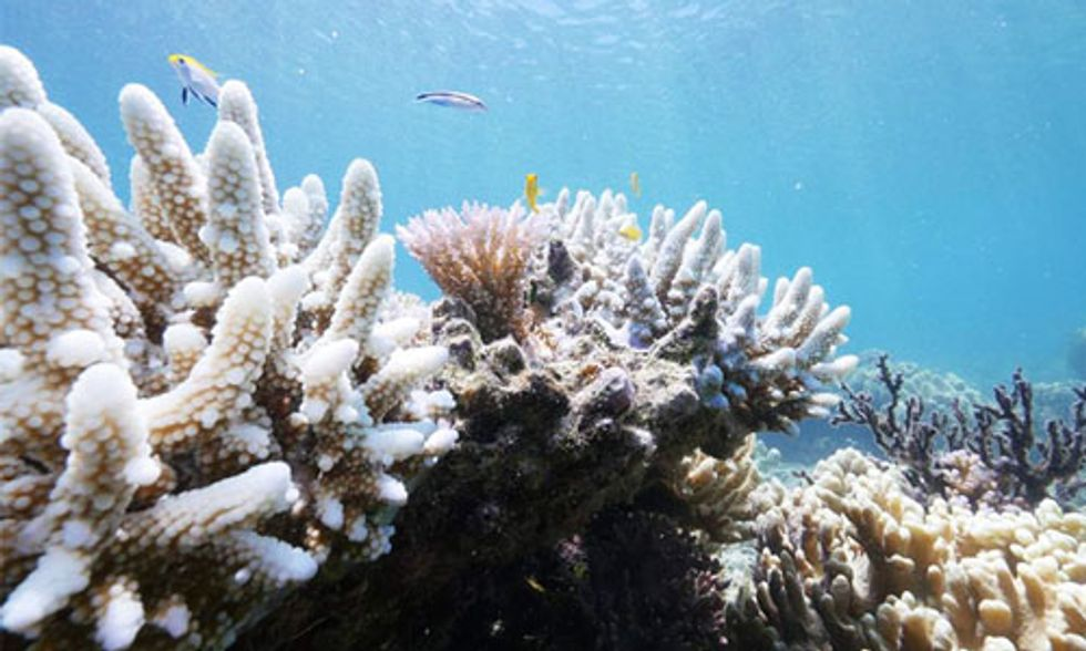 Great Barrier Reef Could Be Dead in 20 Years