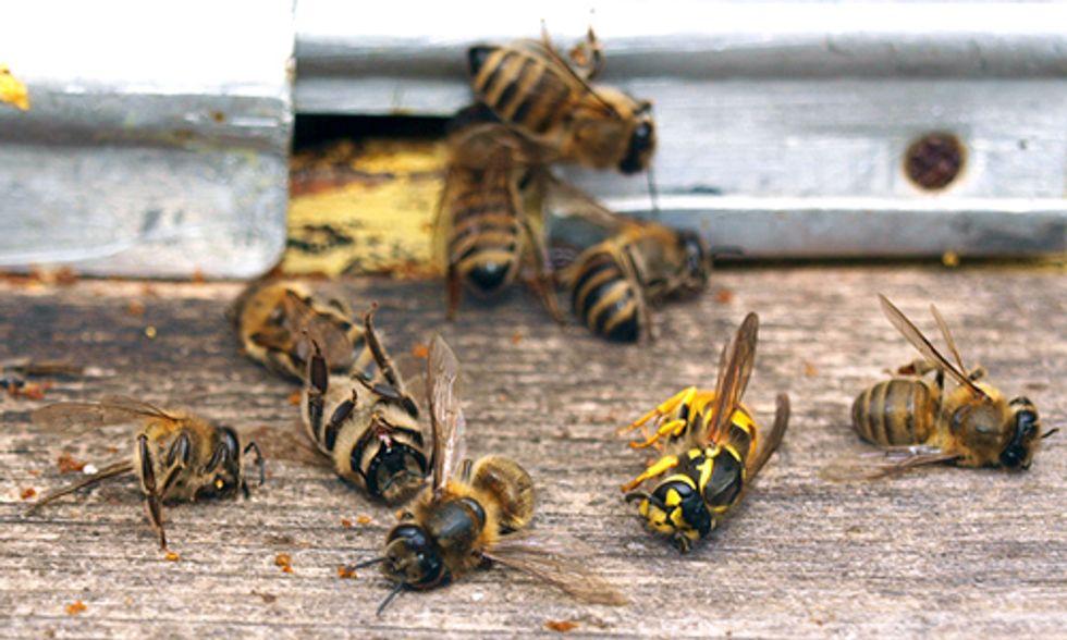 USDA: Beekeepers Lost 44% of Honey Bee Colonies Last Year