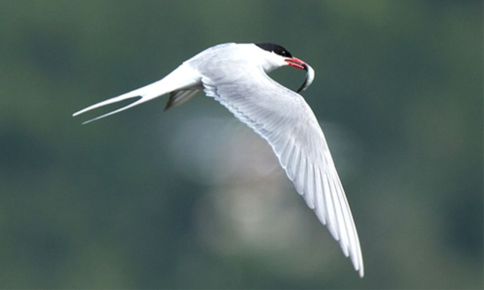 International Migratory Bird Day: Celebrate Some of Our Most Iconic Wildlife