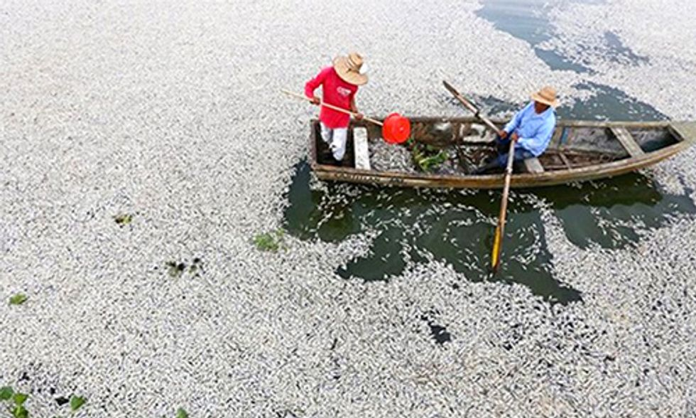 Millions of Dead Fish Washing Up on Vietnam's Shores