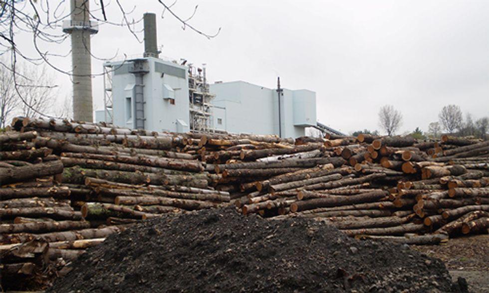 Is Biomass Energy Renewable?