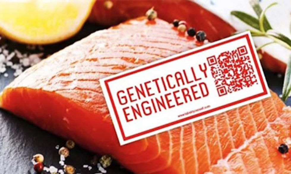 Canada Approves GMO Salmon