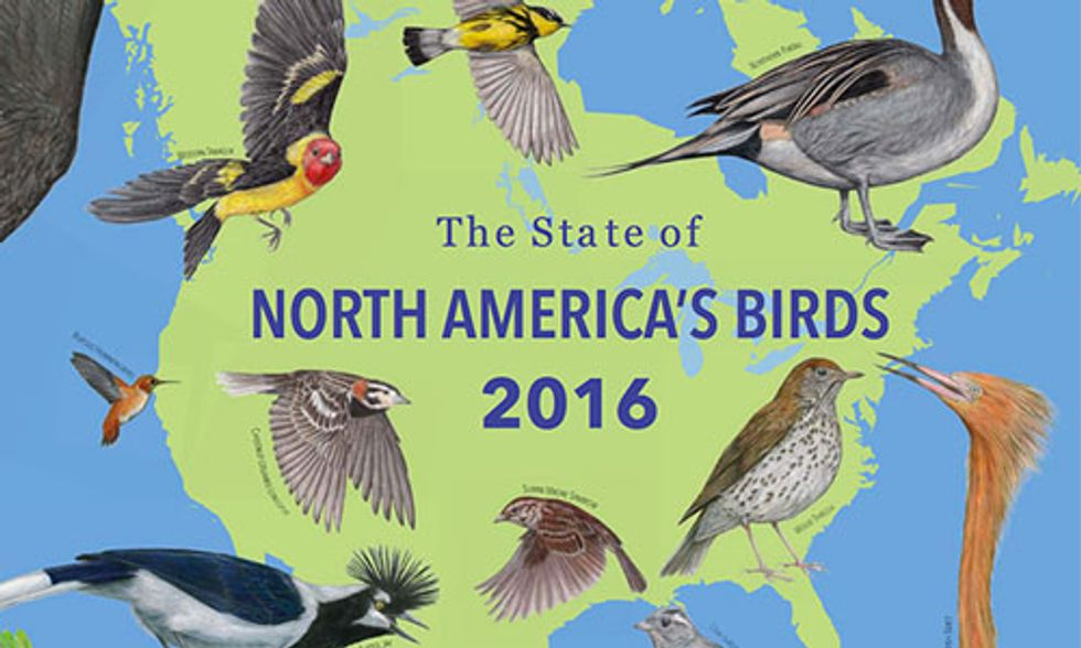 37% of North American Birds Face Extinction