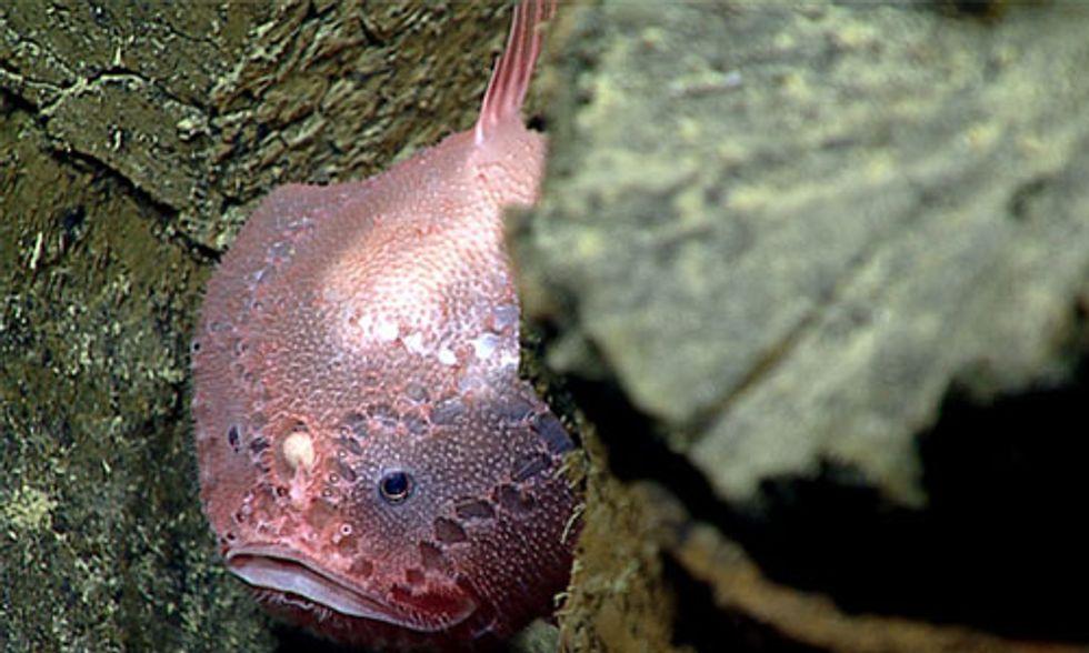 Explore the Deep Sea With NOAA