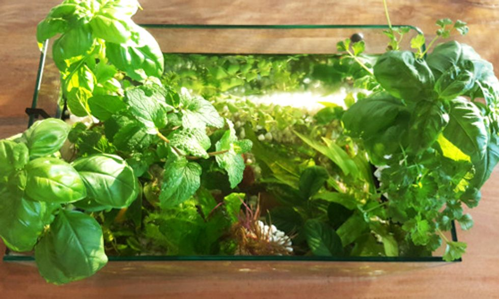 Grow Your Own Food Right in Your Kitchen With This DIY Aquaponics Kit
