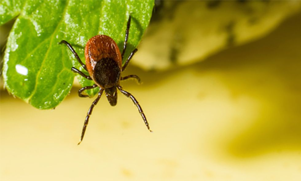 7 Common Myths About Ticks
