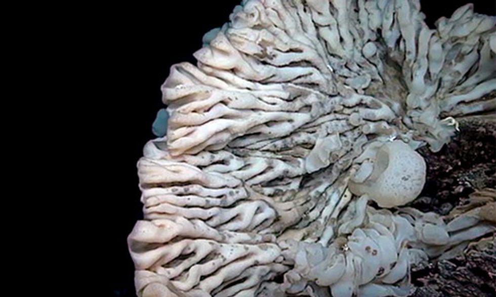 NOAA: World's Largest Sponge Is as Big as a Minivan