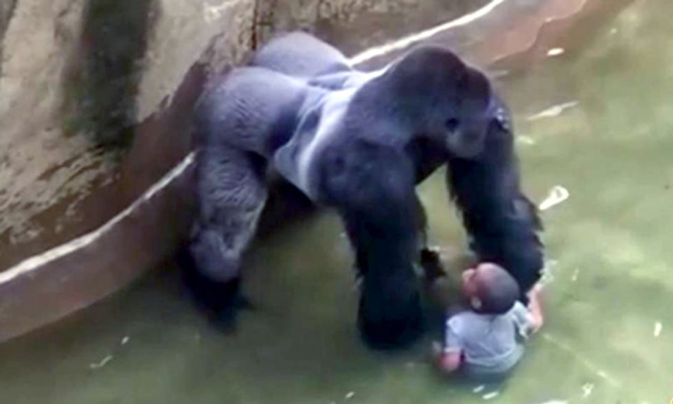 Rare Gorilla Shot Dead After 4-Year-Old Boy Slips Into Animal's Enclosure at Cincinnati Zoo