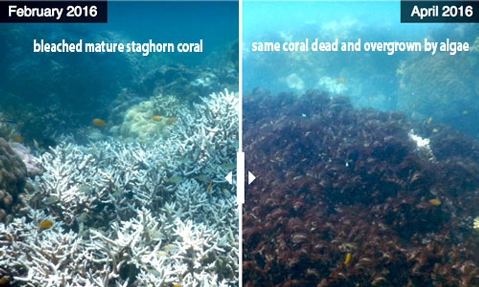 35% of Northern and Central Great Barrier Reef Is Dead or Dying
