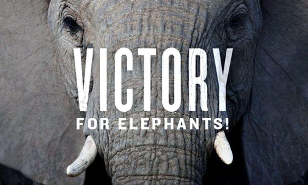 Huge News for Elephants: U.S. Bans Ivory Trade