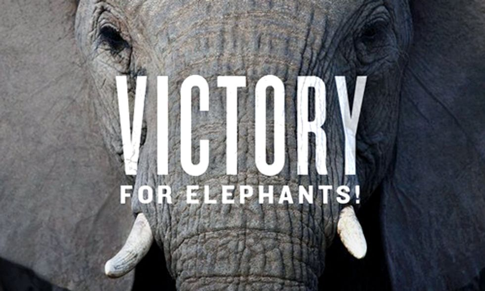 Huge News for Elephants: U.S. Bans Ivory Trade
