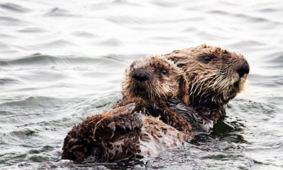 Newborn Sea Otter Reunited With Mom in Sweet and Rare Rescue