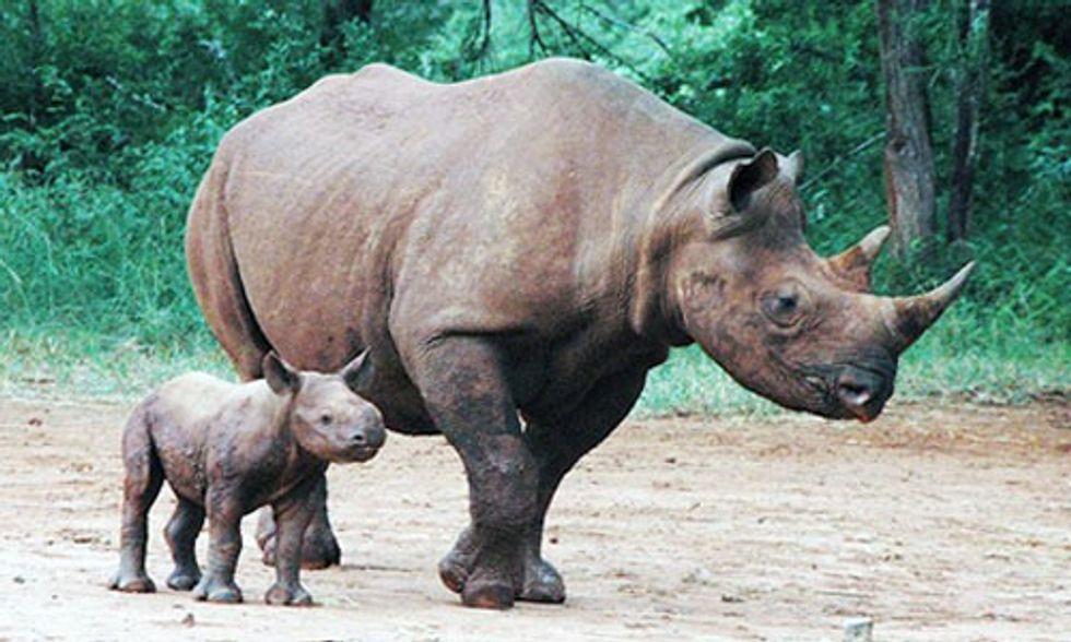 Leonardo DiCaprio, Prince William Celebrate Birth of Two Rare Baby Rhinos