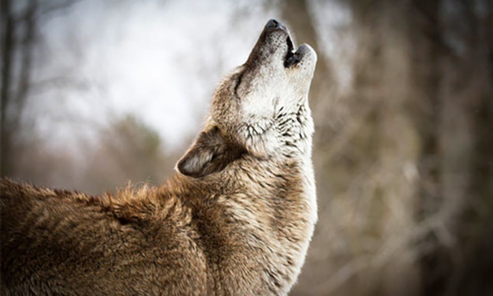 Rewilding Our National Parks