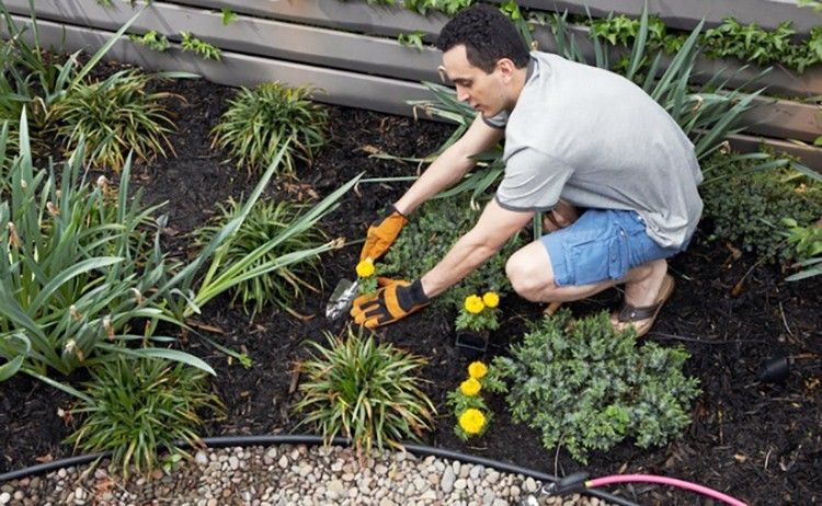 12 Ways to Get Rid of Weeds Without Using Roundup - EcoWatch