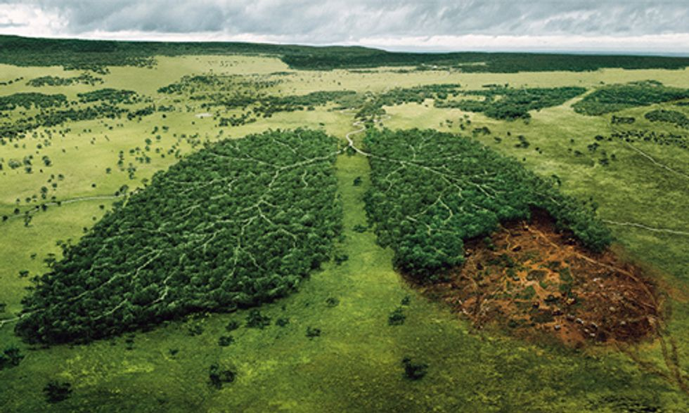 Norway Becomes World's First Country to Ban Deforestation