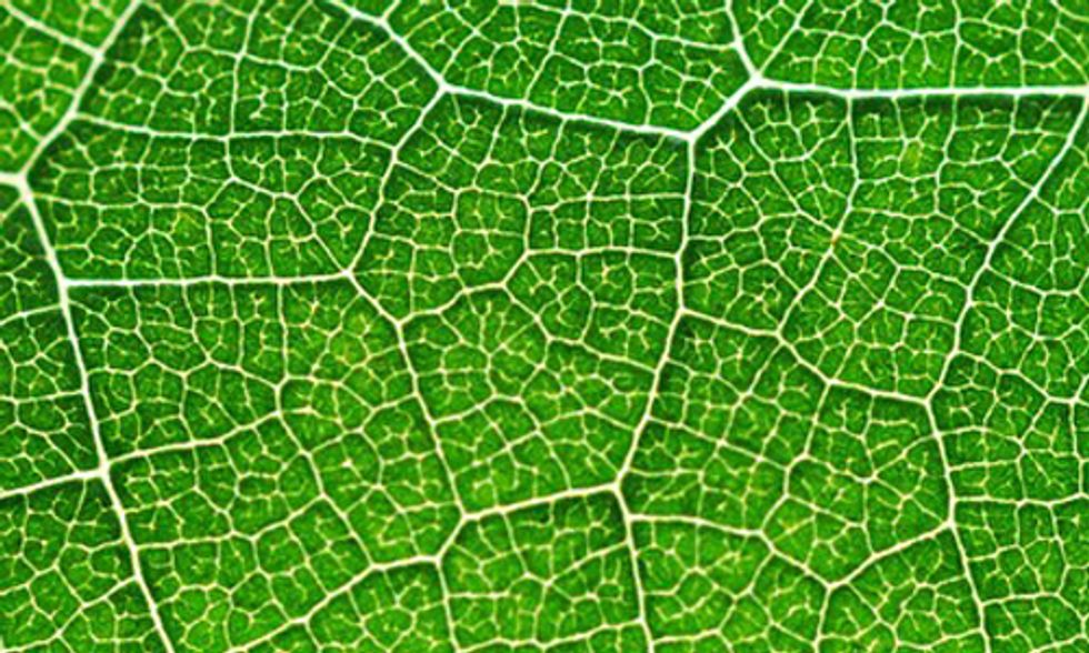 Bionic Leaf Turns Sunlight Into Liquid Fuel 10 Times Faster Than Nature