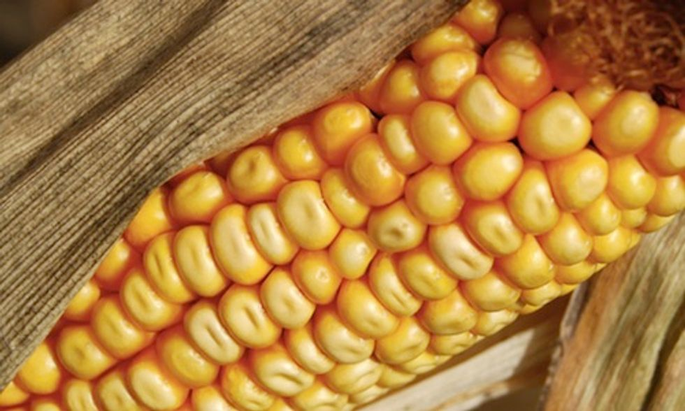 Brazil Won't Buy U.S. GMO Corn, Highlights Worldwide Divide Over GMOs