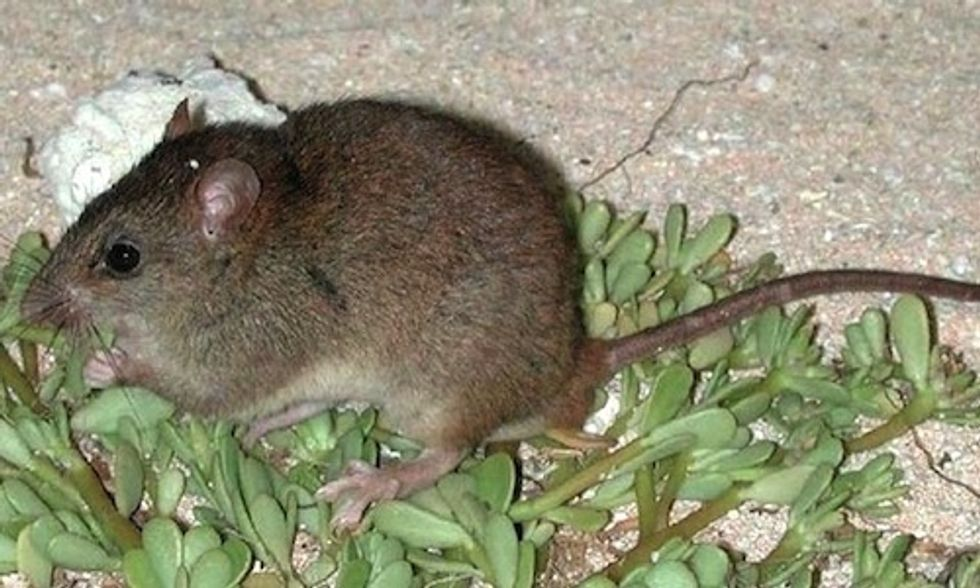 First Mammal Goes Extinct Due to Human-Caused Climate Change