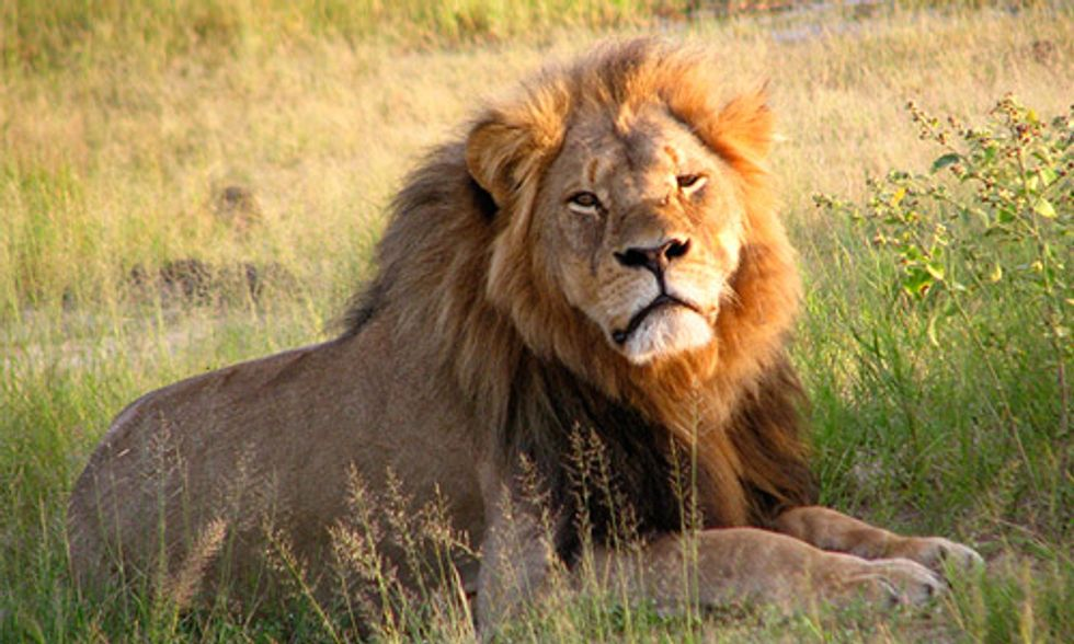 House Democrats Target Trophy Hunting on Anniversary of Cecil's Death