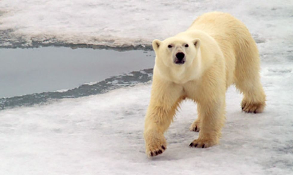 See the World From a Polar Bear's Point Of View
