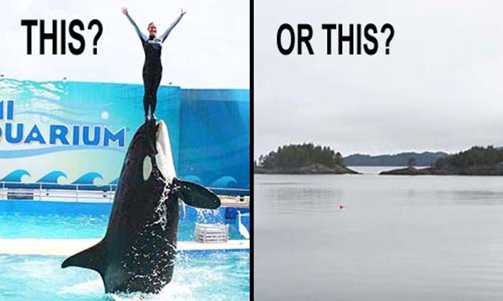 What Freedom Could Look Like for SeaWorld's Killer Whales