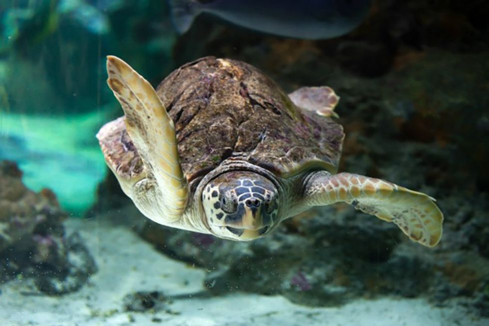 9 Super Cool Facts About Sea Turtles Ecowatch