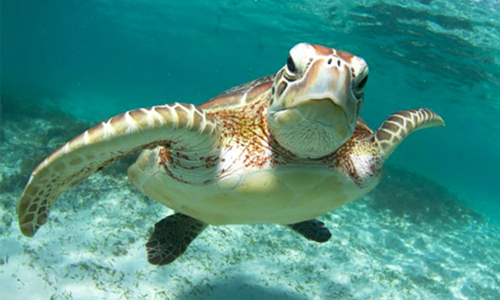 9 Super Cool Facts About Sea Turtles
