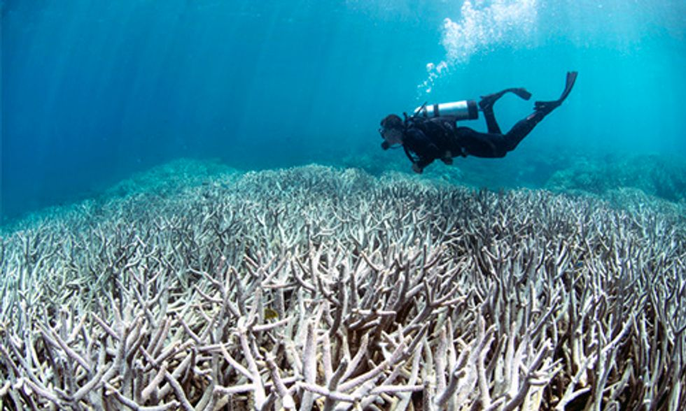 NOAA: World's Worst Coral Bleaching Event to Continue 'With No Signs of Stopping'