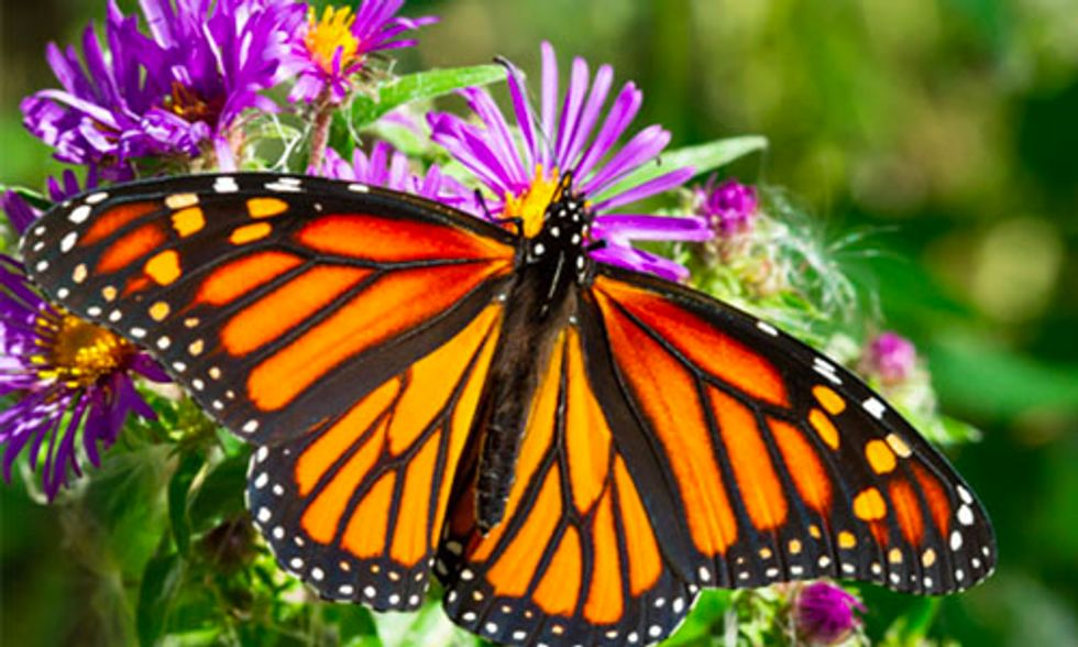 10 Super Cool Facts About Butterflies