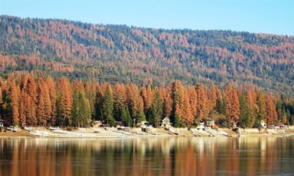 Drought Kills 66 Million Trees in California, Increasing Risk of Catastrophic Wildfires