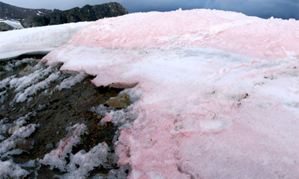 Pink Snow a Bad Sign for the Future, Scientists Say