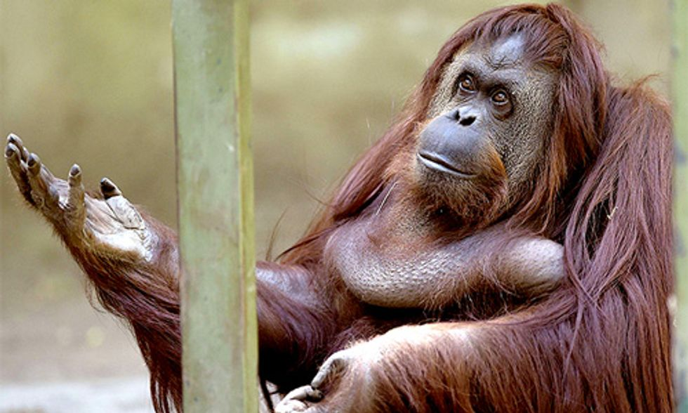 Buenos Aires to Close 140-Year-Old Zoo, Saying 'Captivity Is Degrading'