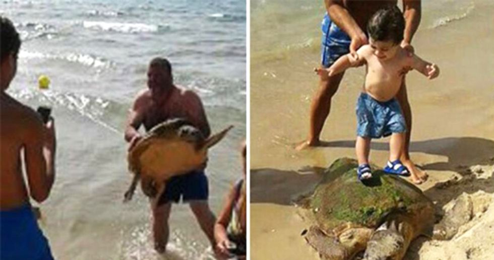 Endangered Sea Turtle Recovering After Being Trampled, Beaten by Selfie-Taking Tourists