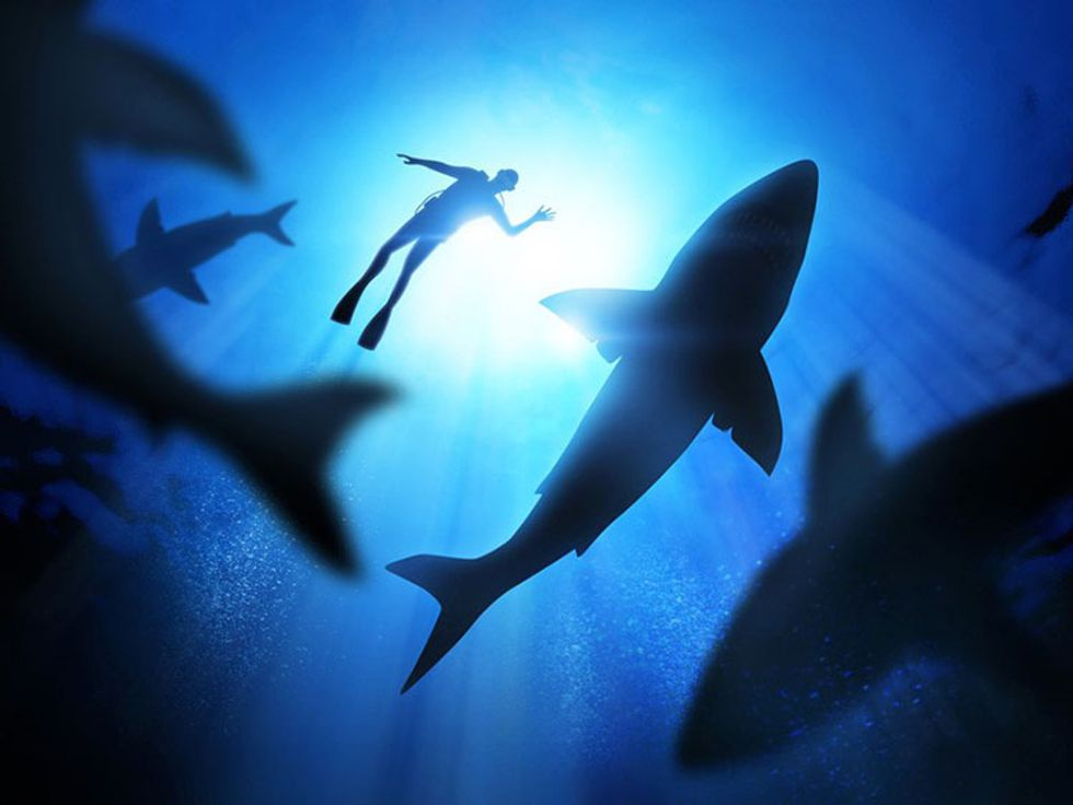 5 Shark Species That Should Be Revered, Not Feared