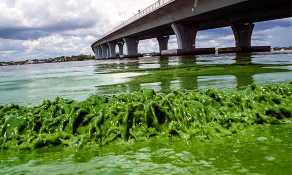 'Guacamole-Thick' Algae Takes Over Florida's Atlantic Coast, 4 Counties Declare State of Emergency