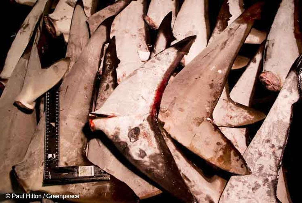 If You Love Sharks, You Should Think Twice Before Buying Tuna