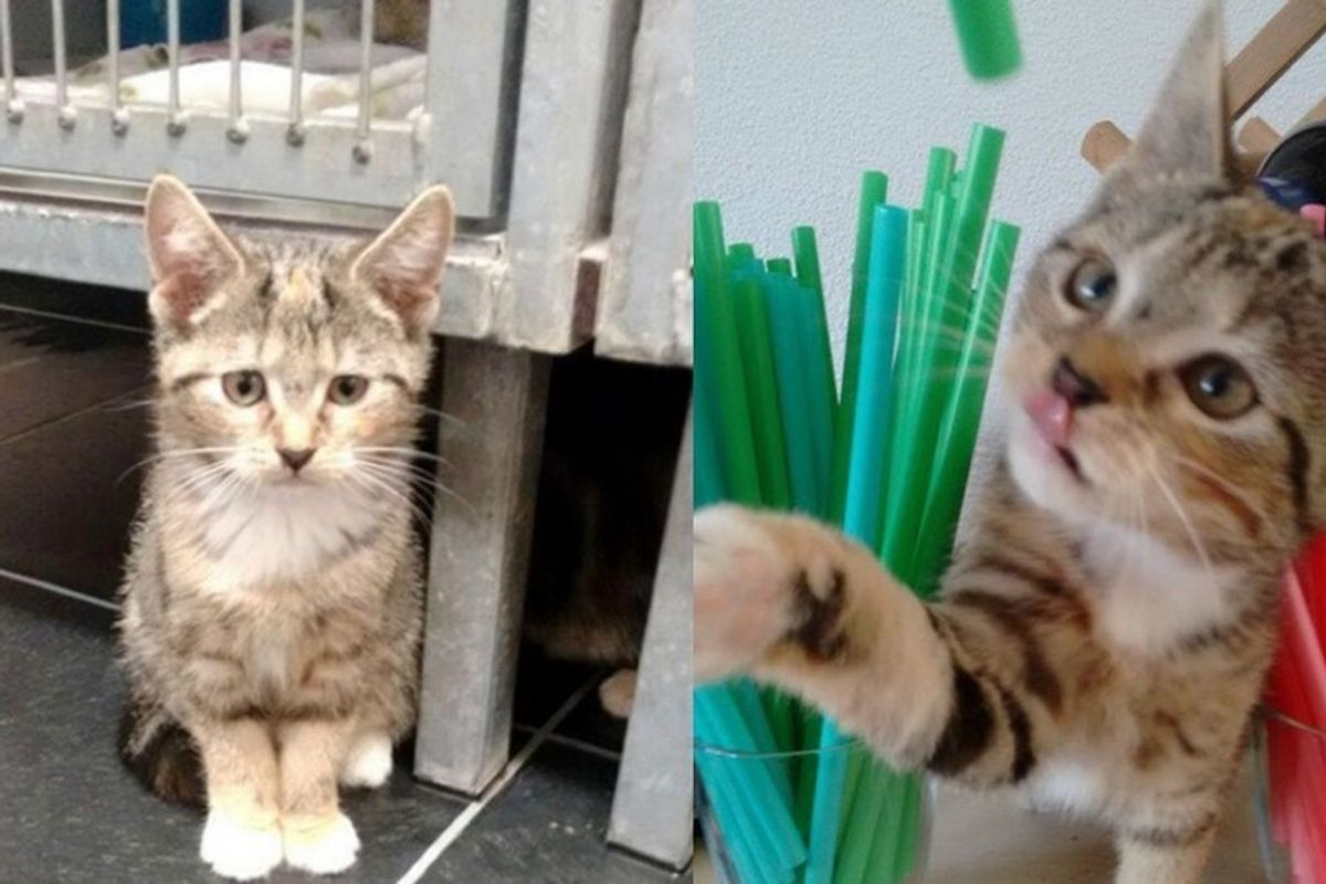 Cat was Shy and Afraid at Shelter, What Adoption Can Do in Just a Few Days..