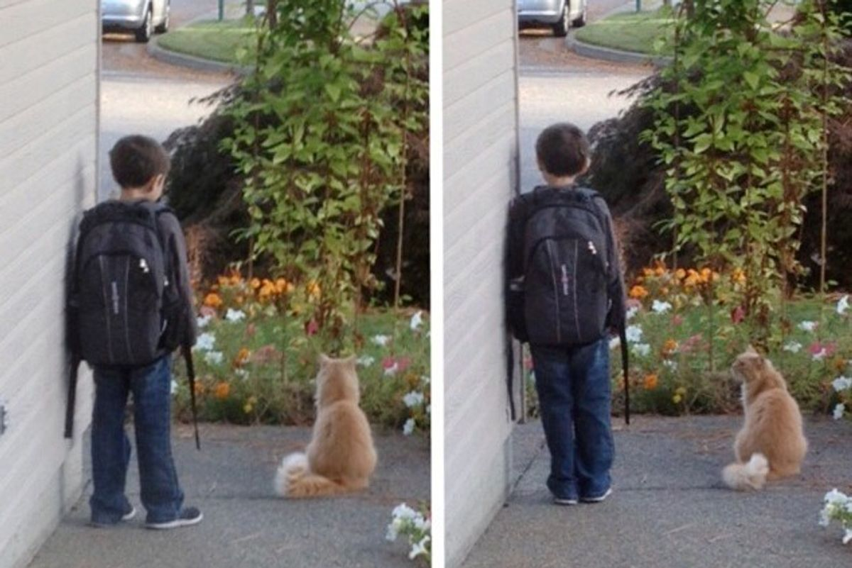 Cat Waits with Boy for School Bus Every Morning