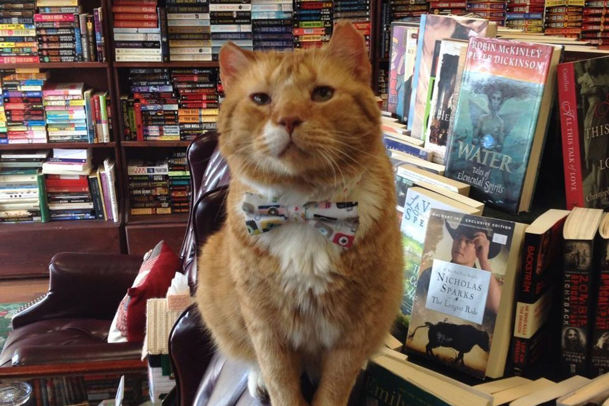 Shelter Cat was Given a Chance, Now 14, He Gives Back to People Every Day at Book Store