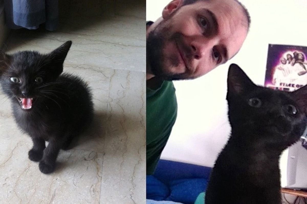 Man Chases Down the Street to Save Crying Kitten So He Could Give Him a Home